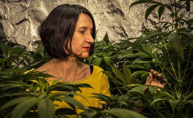 This plant is dispensary Santa marijuana