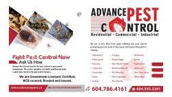 Pest Control Langley