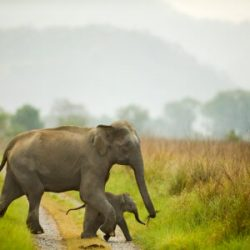 Best wildlife photography tours India