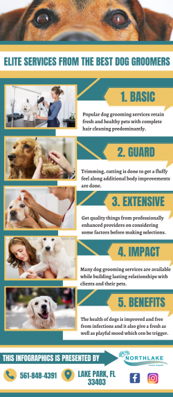 Dedicated Experts For Dog Grooming