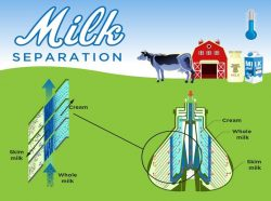 Process Used To Separate Cream From Milk- Milky Day