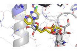 Molecular Docking – MedAI