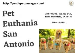 Pet Euthanasia San Antonio – Gentle Pet Passages