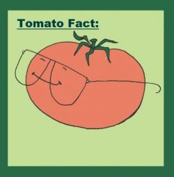 Tomato Fact | John Deschauer