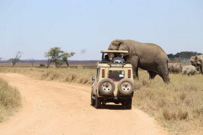 Tanzania Safari Adventure