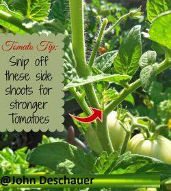 Tomato Growing Tip 1 | John Deschauer
