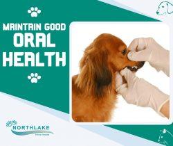 Top-Notch Pet Dental Services