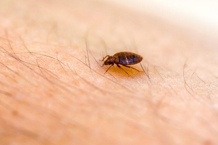 Bed bug control delta