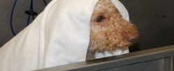 Chapel Hill Pet Grooming