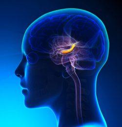 Joel Michael Singer Brain & Nerves Specialist