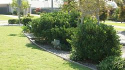 Avail the Best Gardening Services at Best Price