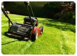 Best Price for Lawn Mowing Services in Perth