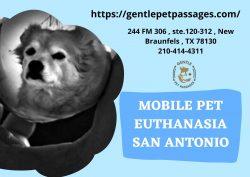 Mobile Pet Euthanasia San Antonio – Gentle Pet Passages