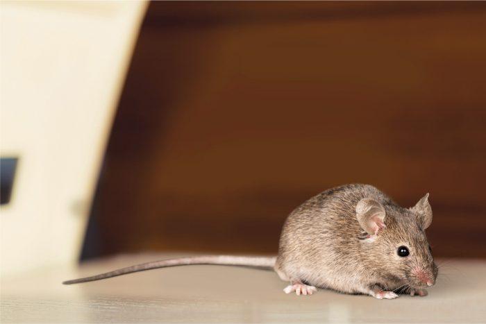 Mouse control delta