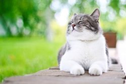 Searching for Blogs on pet care ?
