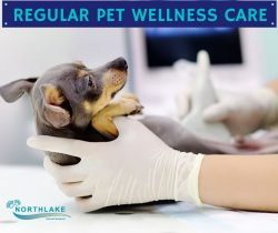 Superior Healthcare for your Pet