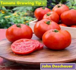 Tomato Growing Tip 2 | John Deschauer
