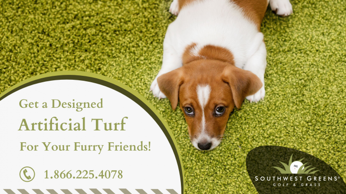 Get a Low Maintenance Synthetic Turf!