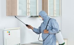 A Pest Control Service Is Important for Many Reasons
