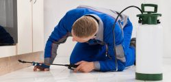 Get Pest Control Service and Stay Healthy by Minimizing fall in Illness