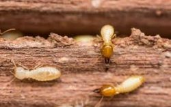 Know the importance of getting regular termite inspection Melbourne