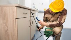 Pest Control Services Offered by Leading Specialists Can Eradicate Pests Quickly and Effectively