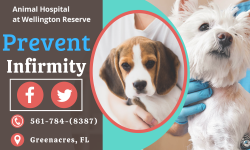 Prevent a Pets Body Health Condition