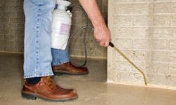 Professional help for practical termites inspection in Melbourne