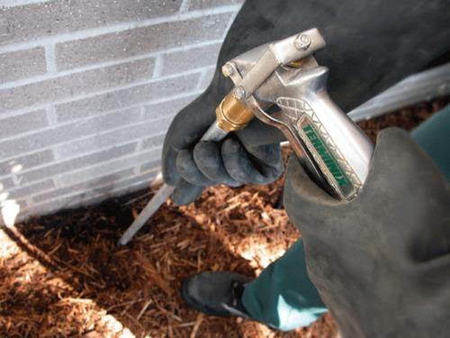 Few Tips to choose the best termite control service