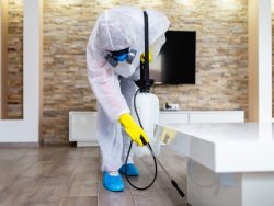 Where can I get affordable Pest control service in Melbourne