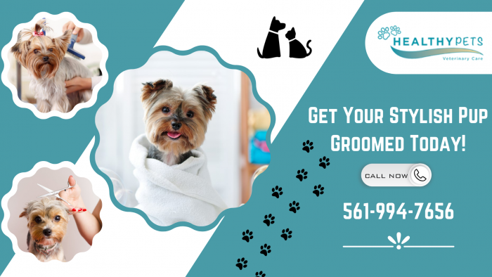 Keep Your Dog's Furry Coat Clean and Shiny