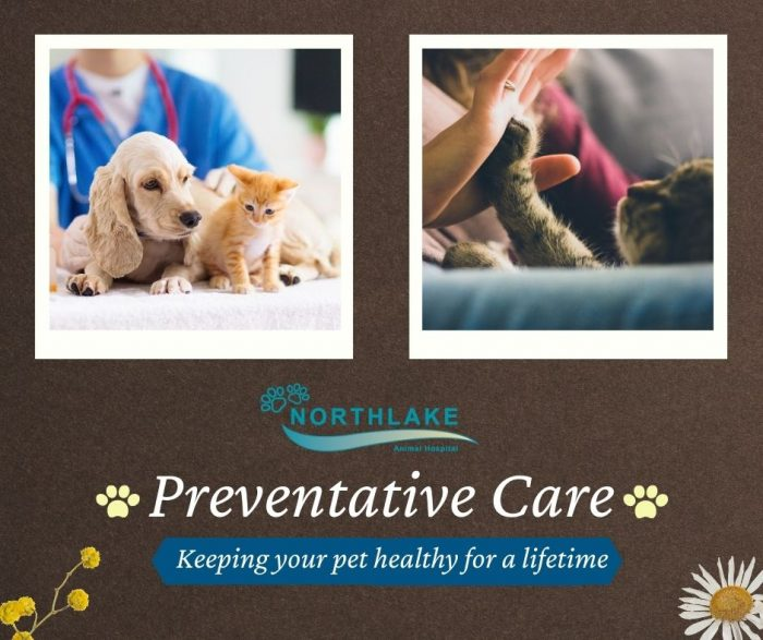 Extensive Health Care For Your Loved Pets