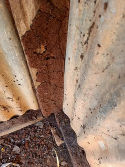 Need Termite treatment Gold coast