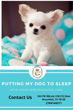 Putting My Dog To Sleep – Gentle Pet Passages