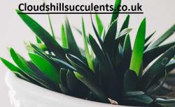 best indoor succulents UK