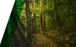 Ecologist Auckland