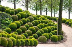 Lawn Mowing Glen Iris