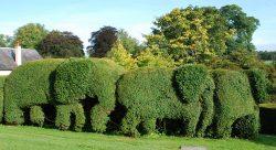 Lawn Mowing Glen Waverley