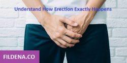 Understand How Erection Exactly Happens