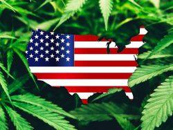 Cannabis Be Legal Nationwide