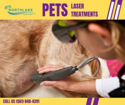 Best Laser Therapy for Dogs