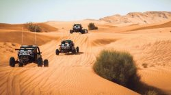 Get the best offers from one of the best tours companies in Dubai