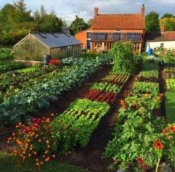 Granada – anuncios clasificados de jardinería, herramientas, productos para el cultivo  ...