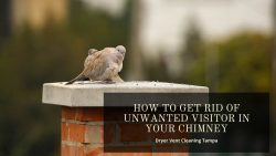 How to get rid of unwanted visitor in your chimney
