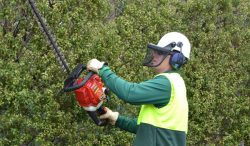Lawn Mowing Chadstone