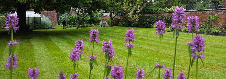 Lawn Mowing Services In Tullamarine