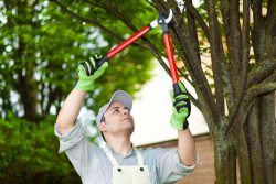 Understand the Importance of Pruning Your Trees and Shrubs