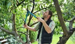 Some Helpful Suggestions and Tricks for Caring for Your Trees