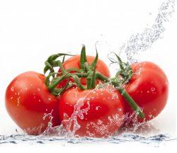 Tomato Expertise | John Deschauer