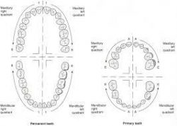 What is thepalmer dental notationsystem?